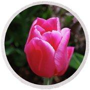 Gorgeous Dark Pink Tulip Blooming In A Garden Round Beach Towel