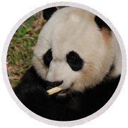Gorgeous Face Of A Giant Panda Bear With Bamboo Round Beach Towel