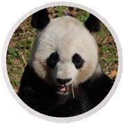 Gorgeous Face Of A Panda Bear Eating Bamboo Round Beach Towel