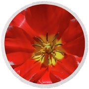 Gorgeous Flowering Red Tulip With A Yellow Center Round Beach Towel