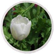 Gorgeous Flowering White Tulip In A Spring Garden Round Beach Towel