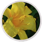 Gorgeous Flowering Yellow Daylily Blooming In A Garden Round Beach Towel