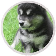 Gorgeous Fluffy Black And White Husky Puppy In Grass Round Beach Towel