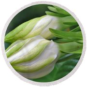 Best Buds Gorgeous Gardenia Flower Buds Round Beach Towel