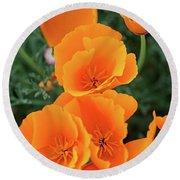 Gorgeous Orange California Poppies Round Beach Towel