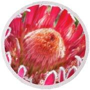 Gorgeous Pink Protea Bloom  Round Beach Towel