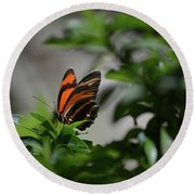 Gorgeous View Of An Oak Tiger Butterfly In The Spring Round Beach Towel