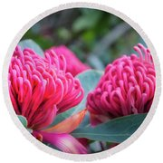 Gorgeous Waratah -floral Emblem Of New South Wales Round Beach Towel