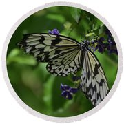 Gorgeous White Tree Nymph Butterfly With It's Wings Spread Round Beach Towel