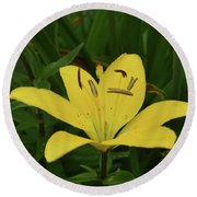 Gorgeous Yellow Lily Growing In Nature Up Close Round Beach Towel