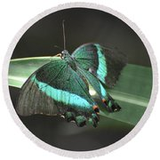 Gorgoeus Close Up Of This Emerald Swallowtail Butterfly  Round Beach Towel