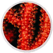 Gorgonian Coral Round Beach Towel