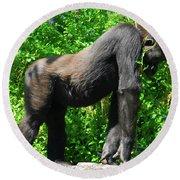 Gorilla Posing Round Beach Towel