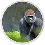 Gorilla Stare Round Beach Towel