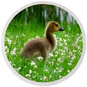 Gosling 1 Round Beach Towel