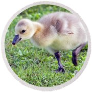 Gosling Round Beach Towel