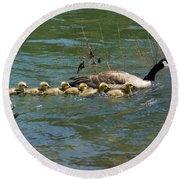 Goslings In A Row Round Beach Towel