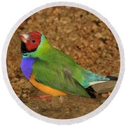 Gouldian Finch Round Beach Towel