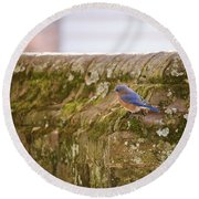 Governor's Palace Bluebird Round Beach Towel