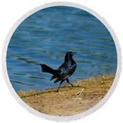 Grackle On The Move Round Beach Towel
