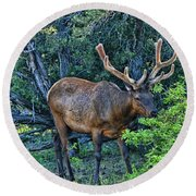 Grand Canyon # 33 - Grazing Elk Round Beach Towel