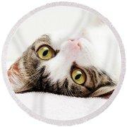 Grand Kitty Cuteness Round Beach Towel