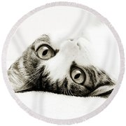 Grand Kitty Cuteness Bw Round Beach Towel by Andee Design