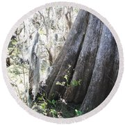 Grandfather Cypress Round Beach Towel