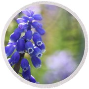 Grape Hyacinth II Round Beach Towel