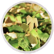 Grape Vine 3 Round Beach Towel