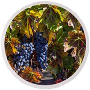 Grapes Of The Napa Valley Round Beach Towel by Garry Gay
