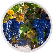 Grapes Ready For Harvest Round Beach Towel