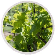 Grapevine In Early Spring Round Beach Towel