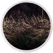 Grass At Sunset Round Beach Towel