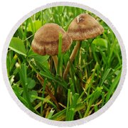 Grass Mushroom Pair           Tubaria Fungii           May           Indiana Round Beach Towel