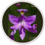 Grass Pink Orchid Round Beach Towel