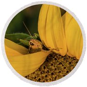 Grasshopper In Sunflower Round Beach Towel