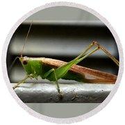 Grasshopper Posing Round Beach Towel