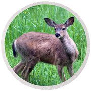 Grassy Doe Round Beach Towel