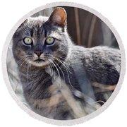Gray Cat In Woods Round Beach Towel