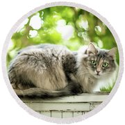 Gray Cat Sitting On A Balcony Round Beach Towel