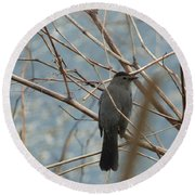 Gray Catbird Round Beach Towel