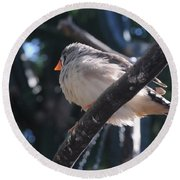 Gray Crowned Rosy Finch   Round Beach Towel