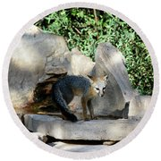 Gray Fox 4 Round Beach Towel