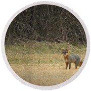 Gray Fox In Lower Pasture Round Beach Towel