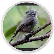 Gray Grey Bird 052814aa Round Beach Towel