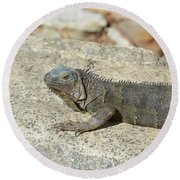 Gray Iguana Sunning And Resting On A Large Rock Round Beach Towel