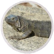 Gray Iguana With Long Talons Sitting On A Rock Round Beach Towel