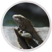 Gray Iguana With Spines Along His Back On A Rock Round Beach Towel