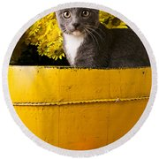 Gray Kitten In Yellow Bucket Round Beach Towel